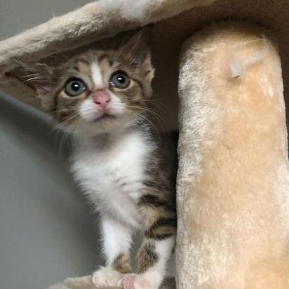 A gatinha perdida agora possui um lar amoroso. (Foto: Instagram/fielda.thefieldcat)