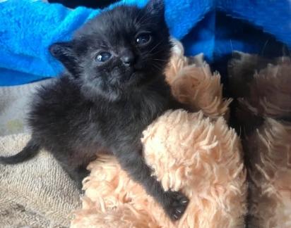 A gatinha foi encontrada com 10 dias de vida em uma fazenda em Indiana, Estados Unidos. (Foto: Facebook/Catsnip Etc)