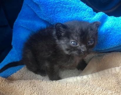 A fazendeira procurou manter a gatinha aquecida. (Foto: Facebook/Catsnip Etc)