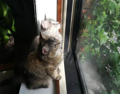 Para consolo após a perda de seu irmão, as gatinhas não saíram uma do lado da outra. (Foto: Facebook/Rescue Chatons Montréal)