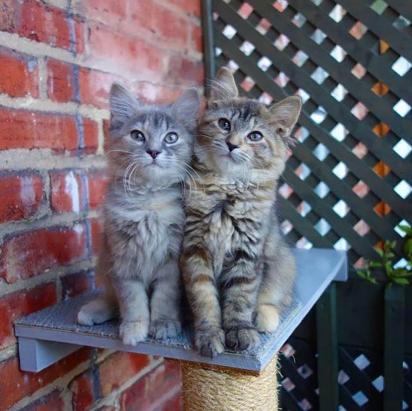 As gatinhas foram nomeadas Zelda e Sapphira. (Foto: Facebook/Rescue Chatons Montréal)