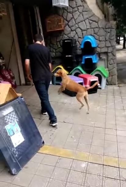 O pet shop vai além de vender produtos para animais, eles doam para os necessitados. (Foto: Facebook/Rafael Bruna)