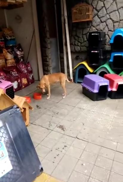 O pet shop também abre espaço para os cachorros de rua se alimentarem. (Foto: Facebook/Rafael Bruna)