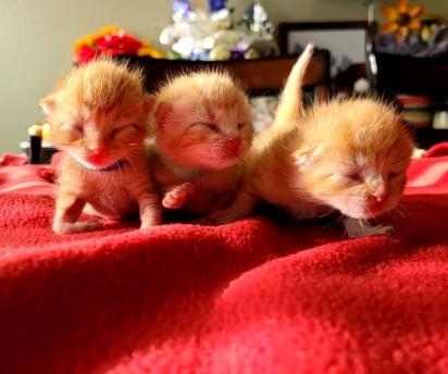 Os gatinhos foram encontrados no mês de agosto com 5 dias de vida no Arizona, Estados Unidos. (Foto: Reprodução/Jin Bottle Babies)