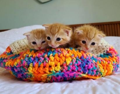 Os trigêmeos ruivos foram chamados de Jenny, Becky e Lizzy. (Foto: Reprodução/Jin Bottle Babies)
