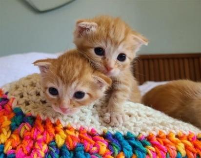 Com cuidado e amor, em questão de dias os gatinhos se recuperaram. (Foto: Reprodução/Jin Bottle Babies)