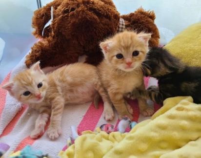 A turminha de gatinhos adoram brincar. (Foto: Reprodução/Jin Bottle Babies)