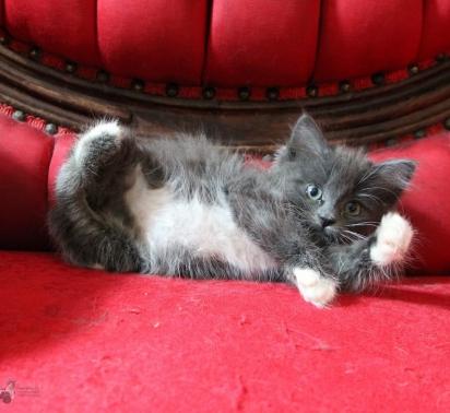 A gatinha tinha 9 semanas quando foi resgatada pela Equipe de Adoção de Gatos do Alasca. (Foto: Instagram/alaskaskaaats)