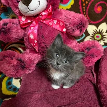 A gatinha foi encaminhada pro veterinário para uma avaliação sobre o seu estado de sua saúde. (Foto: Instagram/alaskaskaaats)