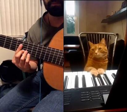 O gatinho Barney aparenta saber muito bem o que está fazendo. (Foto: Reprodução/TikTok)