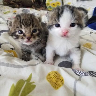 O casal acolheu os gatinhos em sua casa. (Foto: Instagram/meggieslittlezoo)