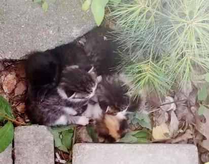 Passaram-se dois meses e a mamãe felina voltou com outra ninhada. (Foto: Instagram/meggieslittlezoo)