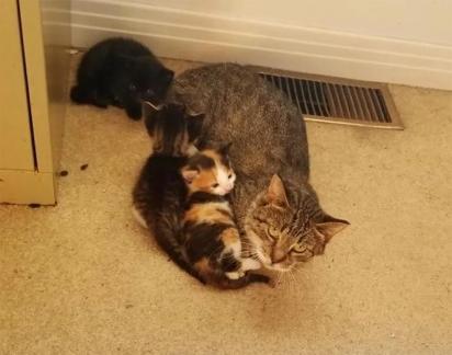 A mamãe felina sempre protetora com seus filhotes. (Foto: Instagram/meggieslittlezoo)