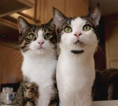 O casal adotou os gatinhos Trunks e Runty. (Foto: Instagram/meggieslittlezoo)