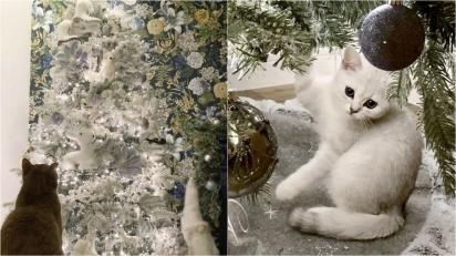 Gata branca se camufla em árvore de Natal da mesma cor. (Foto: Caters News Agency)