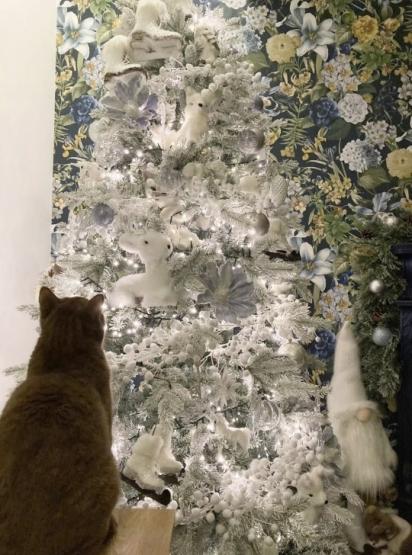 A gatinha Moon soube se esconder muito bem na árvore de Natal. (Foto: Caters News Agency)