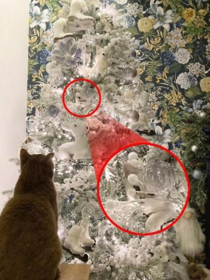 A gatinha de 13 semanas achou o lugar perfeito para se esconder da sua família. (Foto: Caters News Agency)