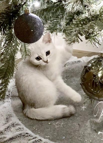 Sarah, tem dois gatinhos a Moo e mais um marronzinho o Freddo. (Foto: Caters News Agency)