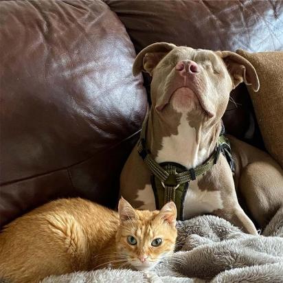 A alegria de Jude ajudou o gatinho Oscar a superar a perda do seu amigo falecido. (Foto: Instagram/tipperswobblykitty)