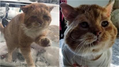 Gatinho que vivia na rua arranha porta de voluntária e pede para entrar durante inverno rigoroso. (Foto: Facebook/One Cat At a Time)