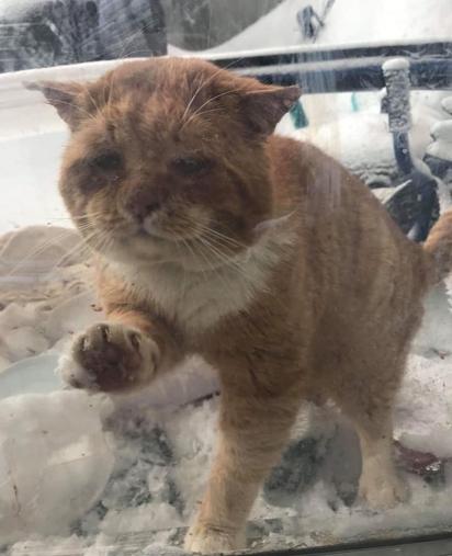 O gatinho arranhou a porta da voluntária pedindo ajuda. (Foto: Facebook/One Cat At a Time)