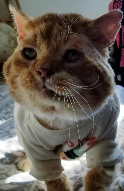 O gatinho foi tratado e seu estado de saúde melhorou. (Foto: Facebook/One Cat At a Time)