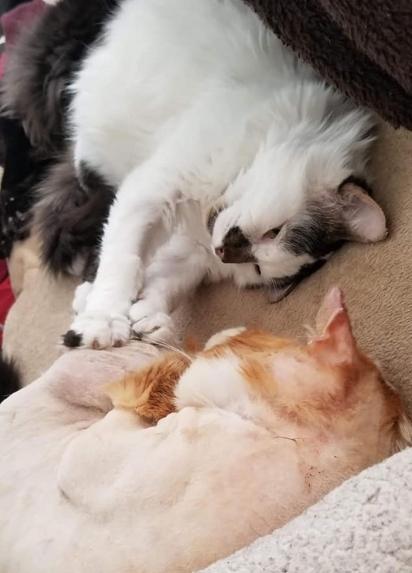 Aslan foi adotado por Jaelle e agora possui um lar amoroso e uma amiga chamada Cleo. (Foto: Facebook/One Cat At a Time)