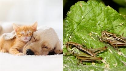 Nestlé lança linha de rações para pets com proteína de inseto e outras alternativas à carne. (Foto: Divulgação/Pixabay | Divulgação Unsplash/James Wainscoat)