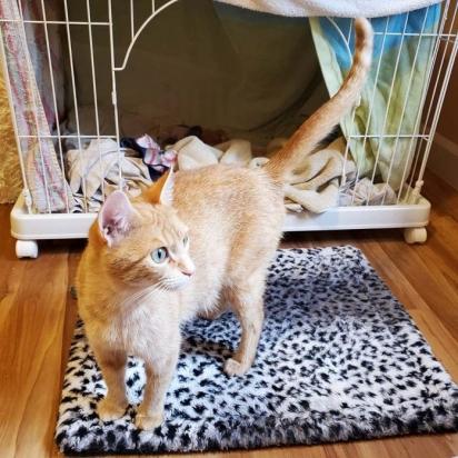 Os voluntários tiveram que ganhar a confiança da gatinha para poderem tirá-la do local que ganhou os filhotes. (Foto: Instagram/catharbororegon)