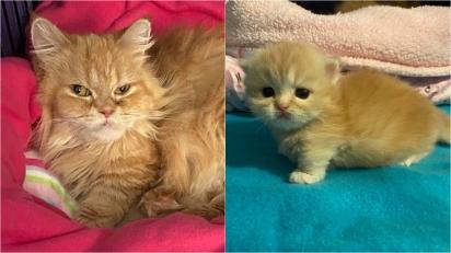 Gata de resgate mimada é paparicada e faz questão que os cuidados se estendam a sua filhote. (Foto: Facebook/Fox Foster Kittens)