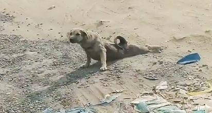 San Eang e seu filho encontraram um cachorro que aparentava estar paraplégico na estrada em que passavam.(Foto: Reprodução/ViralPress)