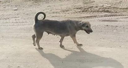 Ao descerem do carro para fazer o resgate do animal, o cachorro se levantou e saiu caminhando. (Foto: Reprodução/ViralPress)