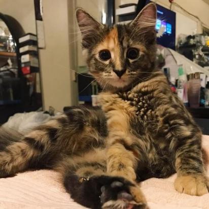 A filhote cresceu e se tornou uma linda felina. (Foto: Instagram/iamchimera407)