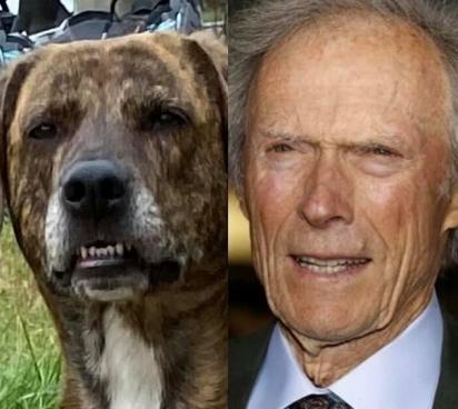 O sorriso deste belo menino o valeu para ser comparado ao diretor Clint Eastwood (à direita). (Foto: Facebook/Anjacember Rowe)