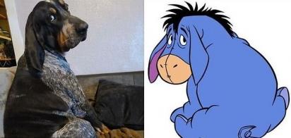 Se a pose foi planejada ou não, eu não sei, mas que esse cachorro que vive no Novo México ficou igualzinho ao Bisonho do Ursinho Pooh, isso ele ficou! (Foto: Facebook/Izzy Torres)