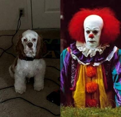 Esse cãozinho de Nebraska está um pouco mais assustador, se parecendo com o palhaço vilão do clássico de terror It. (Foto: Facebook/Emily Muckey)