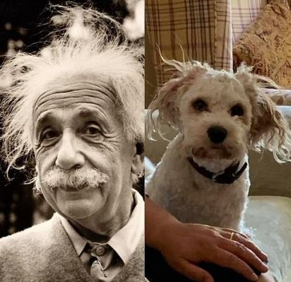 Em Norwich, um amante de cães mostrou como seu cachorro branco desalinhado parecia o cientista Albert Einstein. (Foto: Facebook/Grace Katherine)