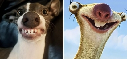 No estado de Washington, o cão da esquerda foi comparado a Manny do desenho animado da Idade do Gelo. Gêmeos! (Foto: Facebook/Forest Lehrman)