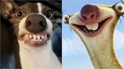 Donos fazem montagens de fotos dos seus animais de estimação que se parecem com personalidades famosas. (Foto: Facebook/Forest Lehrman)