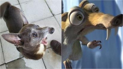Era do Gelo parte 2: Esse cãozinho apavorado é o próprio esquilo Scratch do mesmo filme. (Foto: Facebook/Corrine Approbato)
