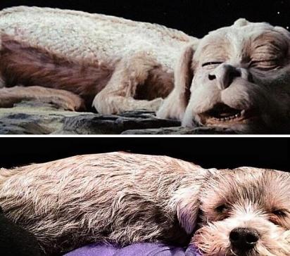 O dono desse cãozinho afirmou que ele se parece com Falkor, o cachorro voador do clássico infantil da década de 1980, A história sem fim. E não é que parece mesmo? (Foto: Facebook/Brittney Schroder)