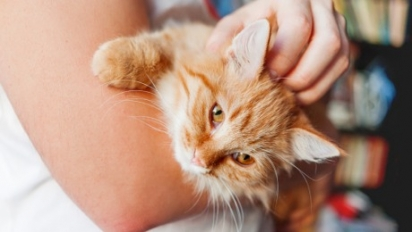 Quando você passa muito tempo fora de casa, os gatos miam para chamar a sua atenção e ganhar carinho. (Foto: Reprodução / Purina UK)