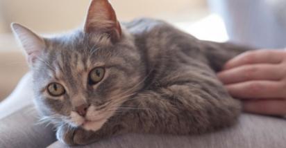 O ato de massagear entre os gatos é algo instintivamente prazeroso para eles. (Foto: Reprodução/Purina UK)