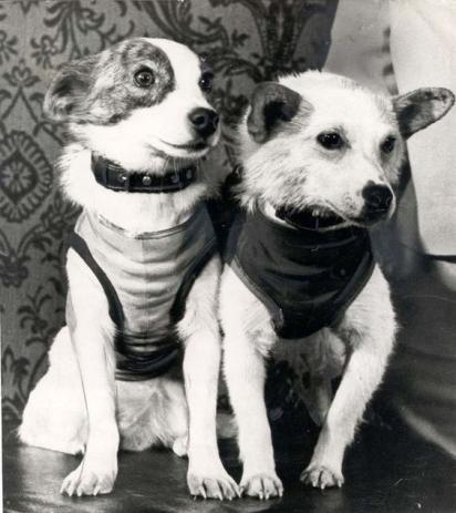 Os cães Strelka e Belka. (Foto: Pinterest/syfy.asia)