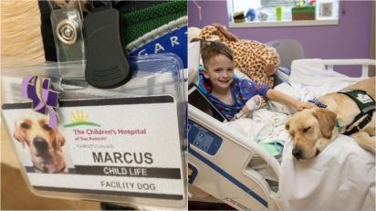 Hospital contrata cãoterapeuta para oferecer apoio e carinho a crianças internadas. (Foto: Childrens Hospital of San Antonio)