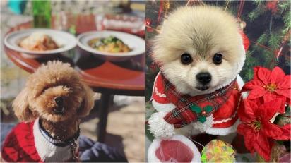 Alimentos típicos do Natal que são tóxicos para os cães. (Foto: Instagram/applepie1043 | Instagram/petsalonwish)