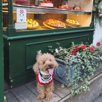 Os cães são nossos amigos leais, merecem todo o nosso cuidado e amor. (Foto: Instagram/applepie1043)