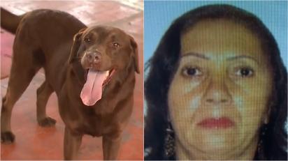Mulher denuncia suposto sumiço do marido e é desmascarada por cão farejador. (Foto: Reprodução Facebook/@CidadeAlertaRecord