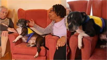 Cão de terapia visita asilo e ajuda moradores a rememorar momentos em que tiveram animais de estimação. (Foto: Reprodução/Susannah Ireland)