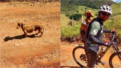 Ciclistas encontram cão desnutrido abandonado em estrada e decidem resgatá-lo. (Foto: Instagram/pelanka_dachsund)